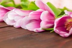 Tulipani su fondo di legno Fotografie Stock
