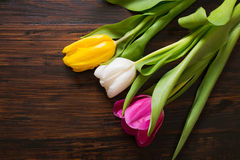 Tulipani su un fondo di legno Fotografia Stock