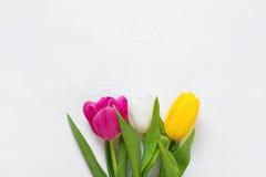 Tulipani su un fondo di legno bianco Fotografia Stock