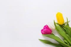 Tulipani su un fondo di legno bianco Immagine Stock