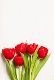 Tulipani su un fondo di legno leggero Immagini Stock Libere da Diritti