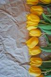 Tulipani su una carta sgualcita Fotografia Stock Libera da Diritti