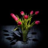 Tulipani su una tavola di legno di gray blu fotografia stock