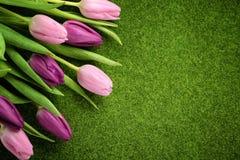 Tulipani sul prato Fotografia Stock Libera da Diritti