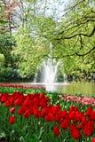 Tulipani variopinti. Immagine Stock Libera da Diritti