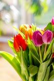 Tulipani variopinti alla luce solare fotografia stock libera da diritti