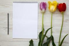Tulipani variopinti con il taccuino su un fondo di legno bianco Vista superiore fotografie stock libere da diritti