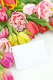 Tulipani variopinti con la nota in bianco Immagini Stock Libere da Diritti