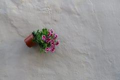 Tulipani variopinti e fiori variopinti Fotografie Stock Libere da Diritti