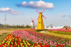 Tulipani variopinti e mulini a vento di legno nel parco Fotografia Stock Libera da Diritti