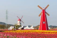 Tulipani variopinti e mulini a vento di legno nel parco, Corea del Sud Immagine Stock Libera da Diritti