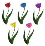 Tulipani variopinti messi Fotografia Stock Libera da Diritti