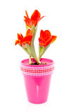 Tulipani in vaso Immagine Stock