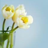 Tulipani in vaso immagini stock libere da diritti