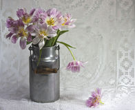 Tulipani in vecchio bidone di latte Immagine Stock Libera da Diritti