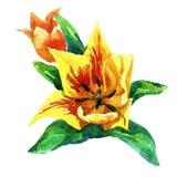 Tulipani verniciati in acquerello Fotografia Stock