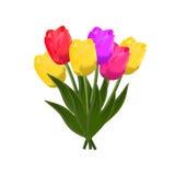 Tulipani Vettore Fotografia Stock
