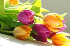 Tulipano Immagini Stock