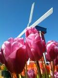 Tulipano Fotografie Stock