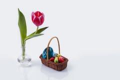 Tulipano con le uova di Pasqua Fotografie Stock Libere da Diritti