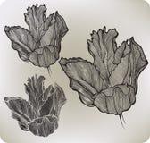 Tulipano decorativo del fiore, a mano disegno Illustrazione di vettore Immagine Stock