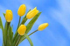 Tulipano del mazzo Fotografia Stock Libera da Diritti