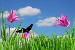 Tulipano dentellare sotto cielo blu Fotografia Stock