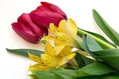 Tulipano e Alstromeria Fotografia Stock Libera da Diritti