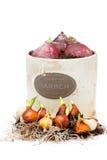 Tulipano e lampadine e vaso da fiori del giacinto isolati Fotografia Stock