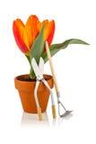 Tulipano e strumenti di giardino Immagini Stock Libere da Diritti