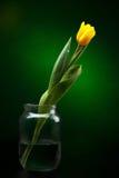 Tulipano giallo Immagine Stock