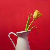 Tulipano giallo in un vaso Fotografia Stock