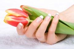 Tulipano in mani della donna Fotografia Stock