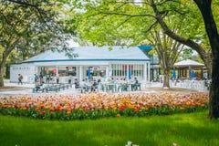 Tulipano nel parco di Showa fotografia stock libera da diritti