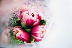 Tulipano rosa luminoso tre Fotografia Stock Libera da Diritti