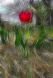 Tulipano rosso astratto Immagine Stock
