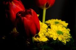 Tulipano rosso e fioriture gialle Fotografia Stock