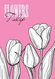 Tulipano stabilito del fiore Fotografia Stock