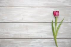 Tulipano su fondo di legno Immagini Stock