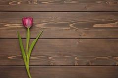 Tulipano su fondo di legno Immagine Stock