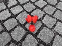 Tulipano sulla terra Fotografia Stock Libera da Diritti