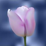 Tulipano variopinto realistico Immagine Stock Libera da Diritti
