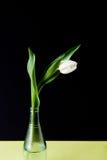 Tulipano in vaso di vetro su fondo nero e giallo Fotografie Stock Libere da Diritti
