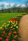 Tulipanowa ścieżka przy Monticello, Virginia obraz stock