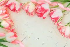Tulipanowa kwiat granica Obraz Stock