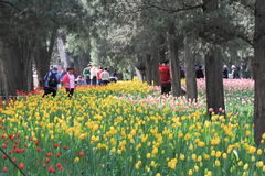 Tulipanowa wystawa obraz stock