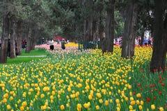 Tulipanowa wystawa zdjęcia royalty free