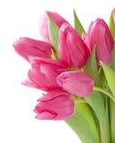 Tulipanowi kwiaty Fotografia Stock