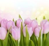 Tulipanowi kwiaty Obrazy Royalty Free