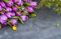 Tulipanowi purpurowi kwiaty na zmroku siwieją tło Zdjęcie Stock